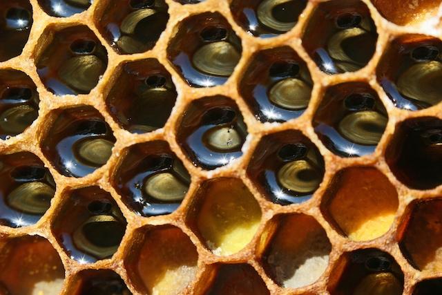Le miel de montagne