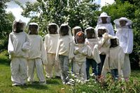La balade au rucher