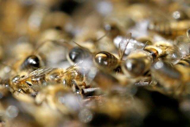 Parfum d'abeille