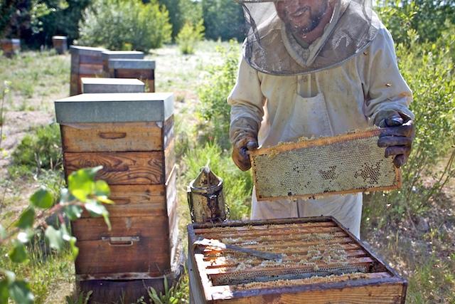 Un cadre de miel d'acacia, à Manhattan sur Dore