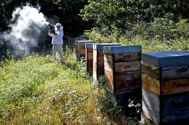 Pour la première fois de sa vie, Gauthier s'apprête à ouvrir une ruche- 00025