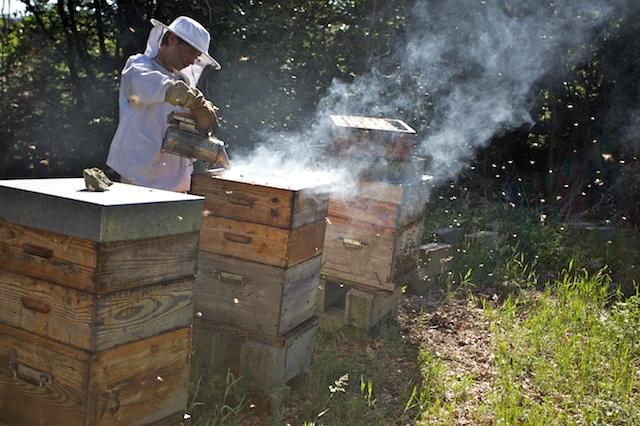 Gauthier et les abeilles- 00026