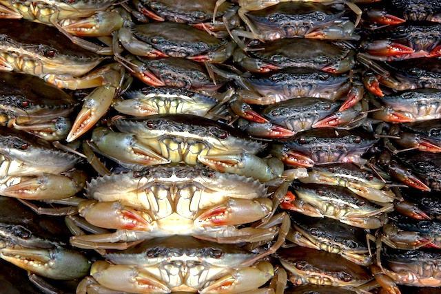 Crabes 00381
