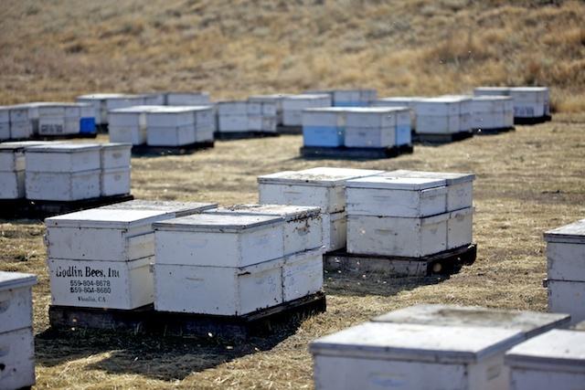 Les abeilles avaient soif !