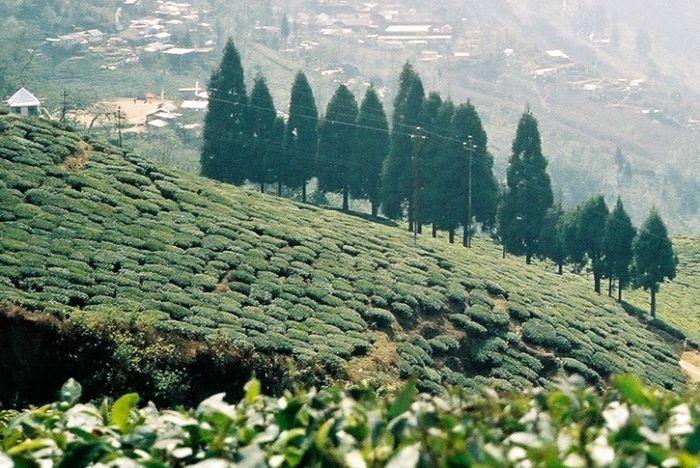 Jardin des thés