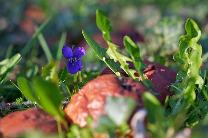 Violette & guillerette