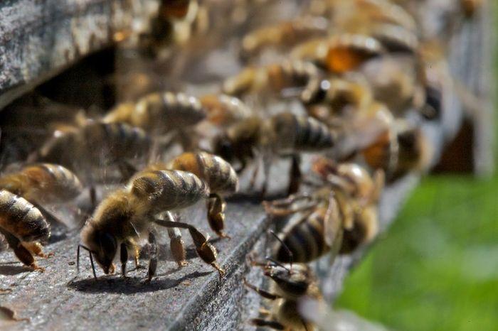Douce comme une abeille...