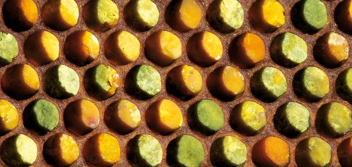 Le pollen fait ses gammes
