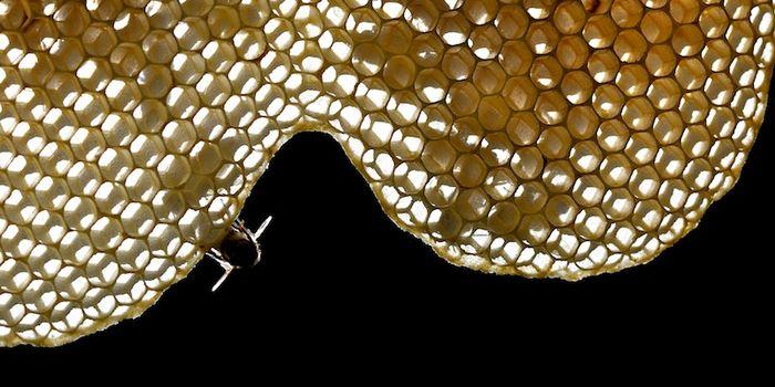 Ballade pour un hexagone d'abeilles