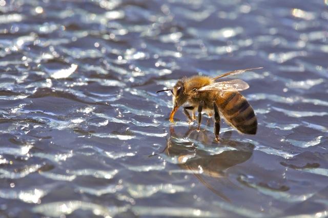 L'abeille océan, N°10