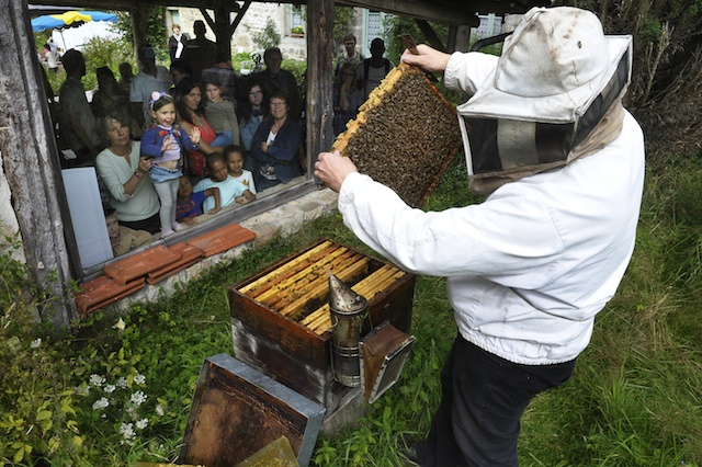 Regarde le bébé abeille !