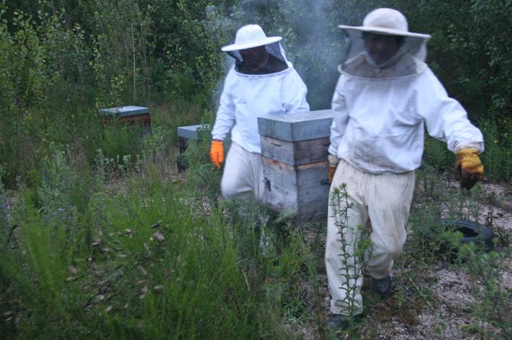 Jcsalat_apiculteurs_001_a_2