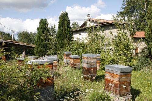 Le rucher de la maison.